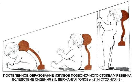 Education of the child bends the vertebral column