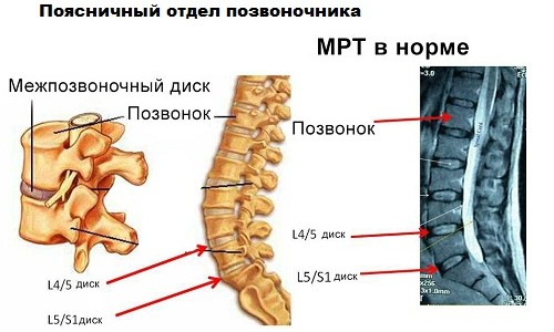 Anatomy and structure of human vertebrae: the names, numbering ...
