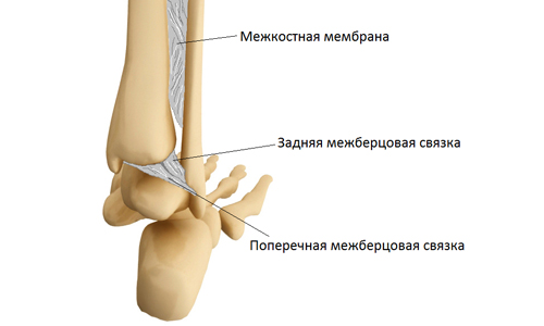 structure of the tibiofibular joint