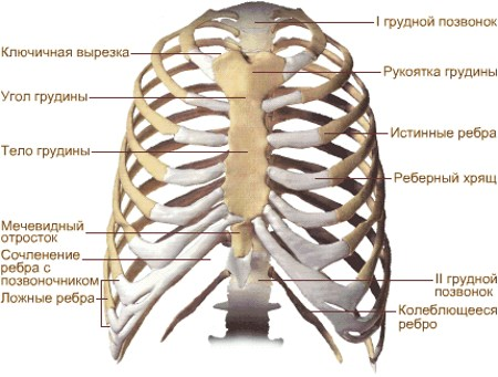 the shape of the chest normal