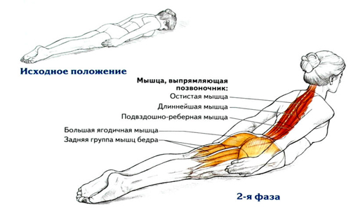 spinal Exercises