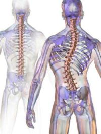 the development of scoliosis